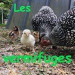 Poules et vermifuges