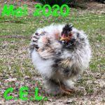 Mai 2020