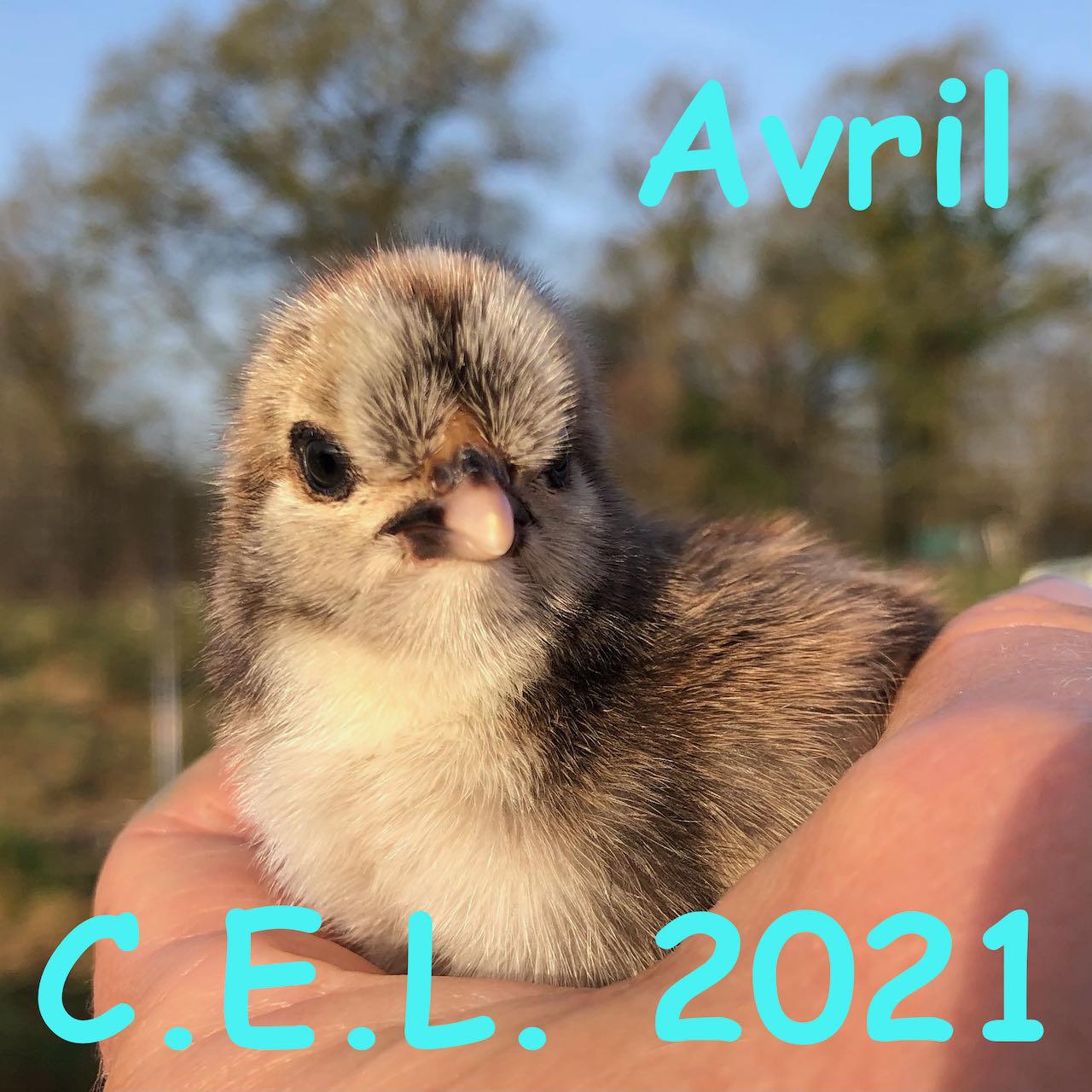 Avril 2021 🤩