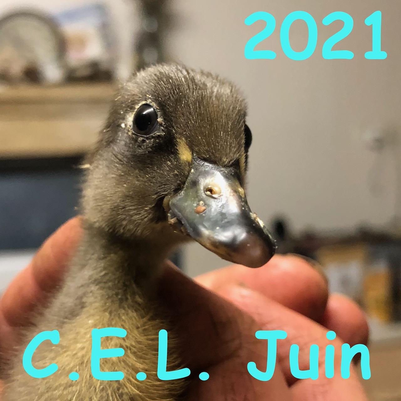 Juin 2021 🤩